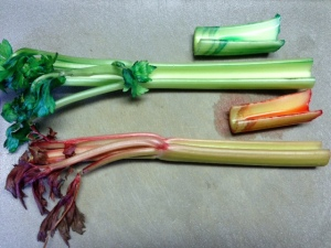 Kid Science--Celery Straws